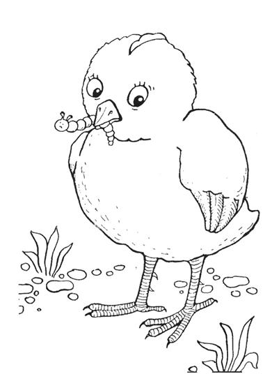Раскраски цыплёнок